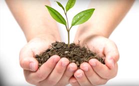 Семена, удобрения и средства защиты